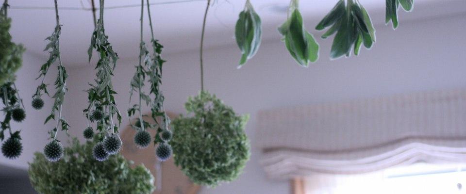 atelier green-thumb